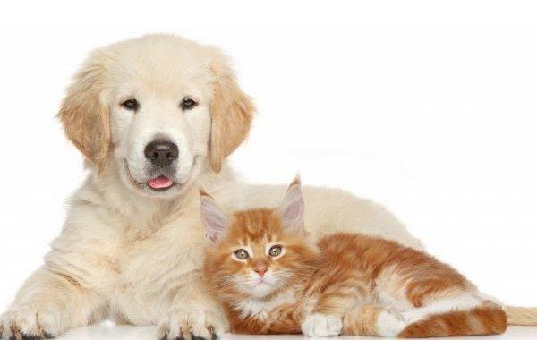 Cani E Gatti Chi è Il Più Intelligente